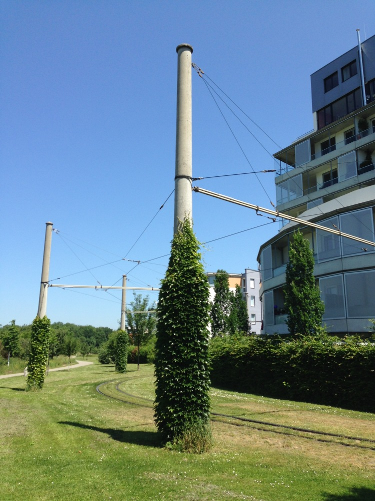 Rieselfeld tram poles